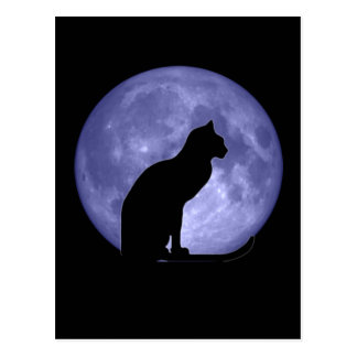 Black Cat Blue Moon Postcard