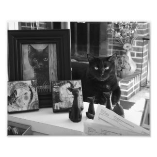 Black Cat Collection photo print