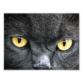 Black Cat Eyes Photo