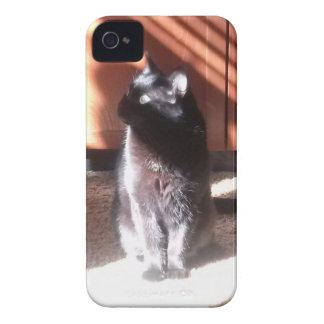 black cat iPhone 4 covers