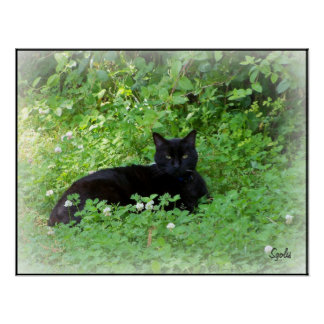 Black Cat Lying in Clover Poster Posters