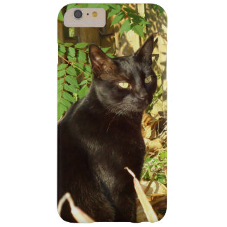Black Cat Morning Sun Barely There iPhone 6 Plus Case