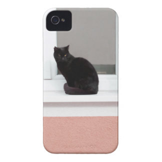 Black Cat on Coral iPhone 4 Cases