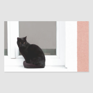 Black Cat on Coral Sticker