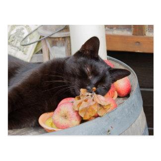 black cat on old barrel postcard