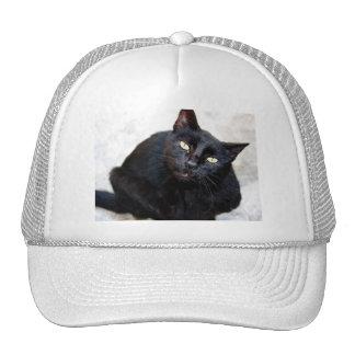Black Cat Portrait Cap