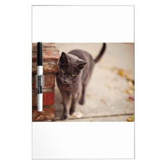 Black Cat Rubs Against A Brick Wall Dry Erase Board