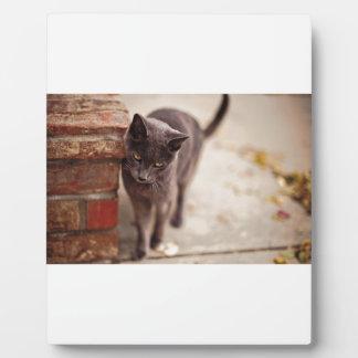 Black Cat Rubs Against A Brick Wall Photo Plaque