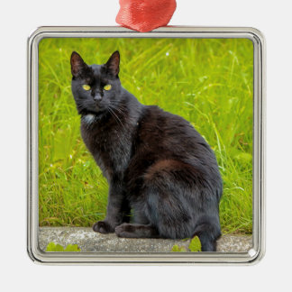 Outdoor cat christmas tree decorations baubles zazzle for Cat outdoor christmas decorations