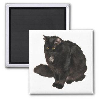 Black Cat Star Noir Square Magnet