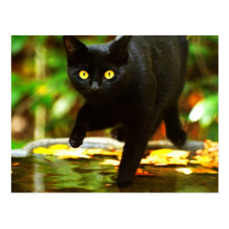 Black Cat With Striking Yellow Eyes Postcard