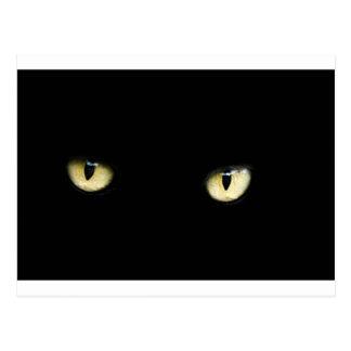 Black Cat's Eyes Postcard