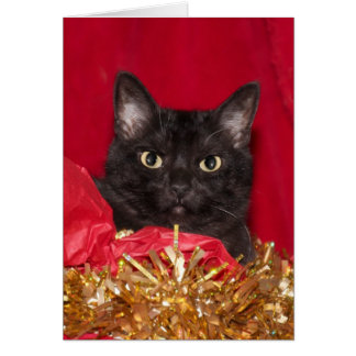 Black Christmas cat Card