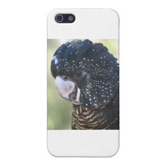 Black Cockatoo iPhone 5 Covers
