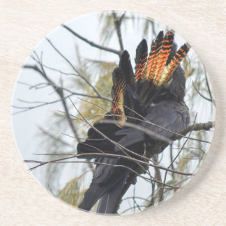 BLACK COCKATOO QUEENSLAND AUSTRALIA COASTER