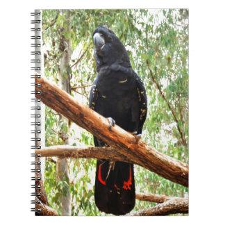 BLACK COCKATOO QUEENSLAND AUSTRALIA NOTEBOOK