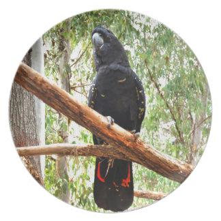 BLACK COCKATOO QUEENSLAND AUSTRALIA PLATE
