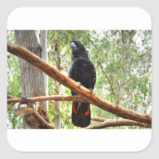 BLACK COCKATOO QUEENSLAND AUSTRALIA SQUARE STICKER