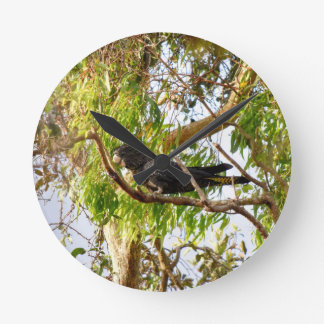 BLACK COCKATOO RURAL QUEENSLAND AUSTRALIA ROUND CLOCK