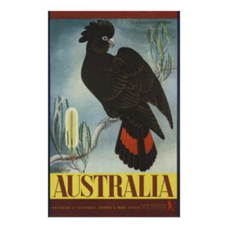 Black Cockatoo Vintage Poster
