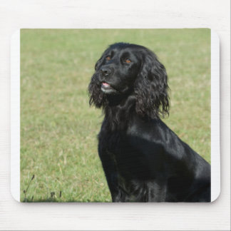 black cocker spaniel sitting mouse pad