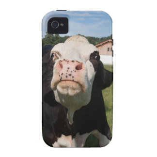 black cow attacking you iPhone 4/4S cases