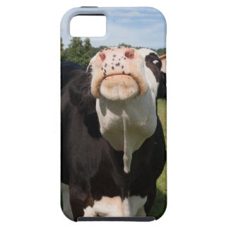 black cow attacking you iPhone 5/5S cases
