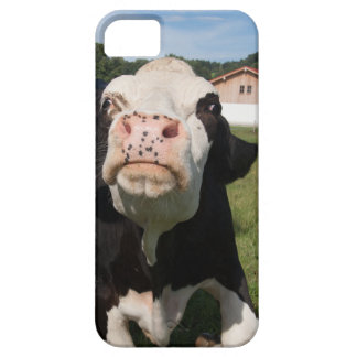 black cow attacking you case for iPhone 5/5S
