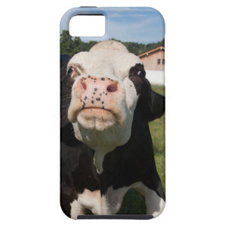 black cow attacking you iPhone 5/5S case