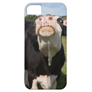 black cow attacking you iPhone 5 cases