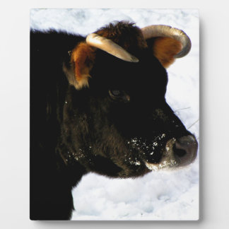 Black Cow with horns Plaque