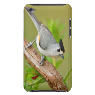 Black-Crested Titmouse Barely There iPod Case