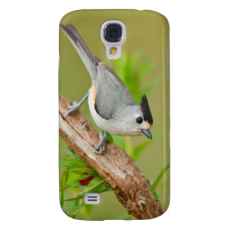 Black-Crested Titmouse Samsung Galaxy S4 Cover