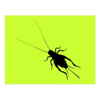 Black Cricket Postcard