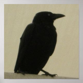 Black Crow Posters