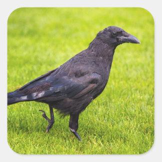 Black crow square sticker