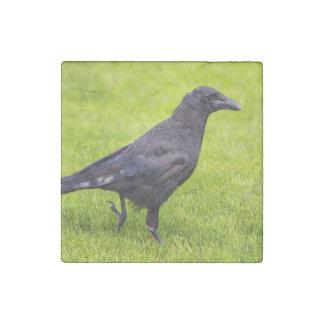 Black crow stone magnet