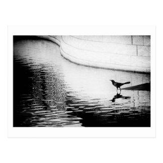 Black Crow with Reflection on Water - Photo Postca Postcard