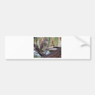 Black Crowned Night Heron Juvenile Bumper Stickers