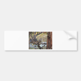 Black Crowned Night Heron Juvenile Bumper Sticker