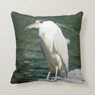 Black Crowned Night Heron Looking For A Meal Cushion