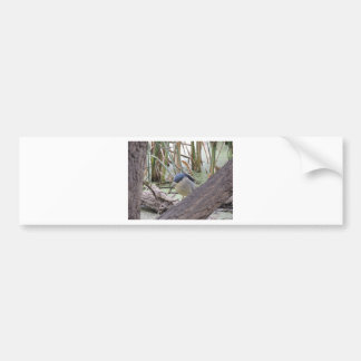Black Crowned Night Heron Male Bumper Sticker