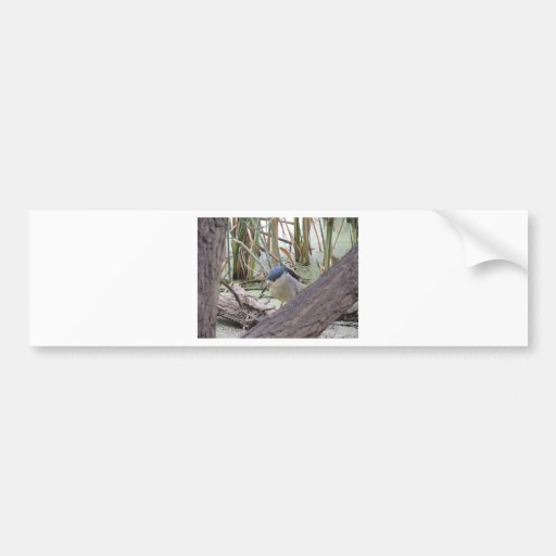 Black Crowned Night Heron Male Bumper Stickers