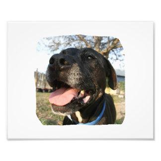 Black Dog Pink Tongue Smiling In Camera Art Photo