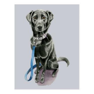 Black Dog Watercolor Painting Postcard