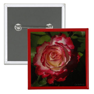 Black-Edged Red Rose Button