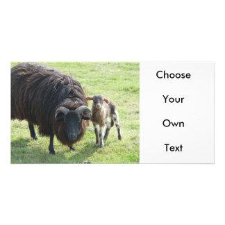 Black Ewe Custom Photo Card