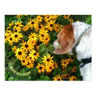 Black-Eyed Susan Daisy Dog Postcard