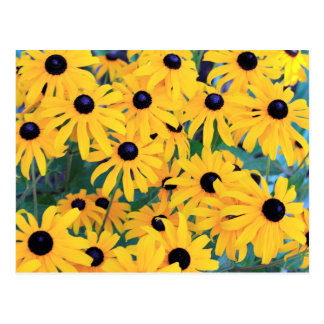 Black Eyed Susan Flowers in Deep Yellow Postcard