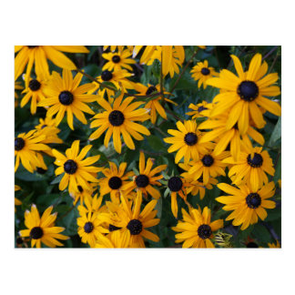 Black-eyed Susan Flowers Postcard